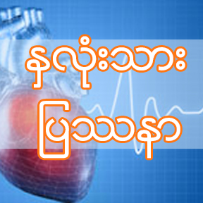 Burmese_The heart of the matter