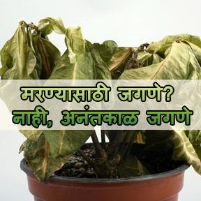 मरण्यासाठी जगणे? नाही, अनंतकाळ जगणे(marathi-live die live forever)